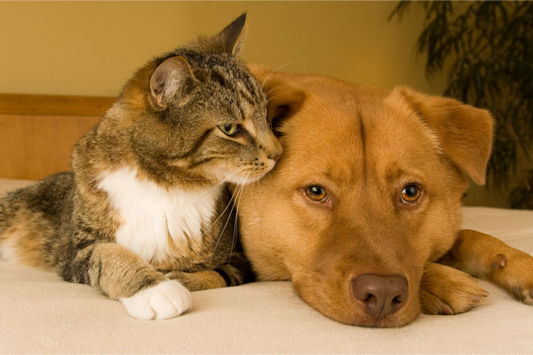 cat and dog depicting their impact on indoor air quality in home
